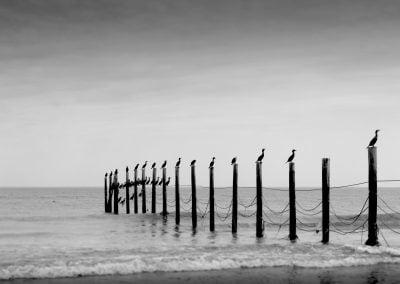 Cormorants, USA | Ⓒ JCNicholson