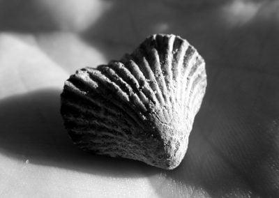 Shell, Morocco | Ⓒ JCNicholson