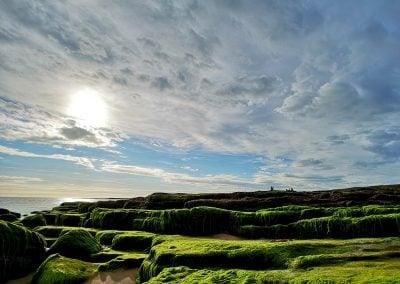 Seaweed, England | Ⓒ JCNicholson