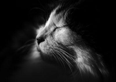 Cat | Ⓒ JCNicholson