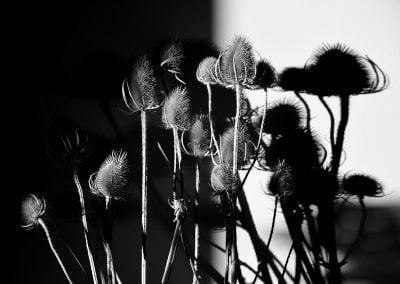 Flowers, Scotland | Ⓒ JCNicholson